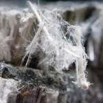 15065448-fibre-di-amianto-crisotilo-che-causano-la-malattia-polmonare-bpco-mesotelioma